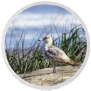 Young Seagull No. 2 Round Beach Towel