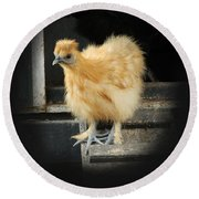 Young Silkie Round Beach Towel