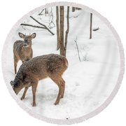 Young Spike Buck And Doe Whitetail Deer In Snowy Woods Round Beach Towel