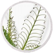 Young Spring Fronds Of Silver Tree Fern On White Round Beach Towel