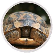 Young Spur Thighed Tortoise Looking Out Of Its Shell Round Beach Towel