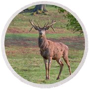 Young Stag Round Beach Towel