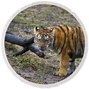 Young Tiger Round Beach Towel