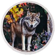 Young Timber Wolf Round Beach Towel