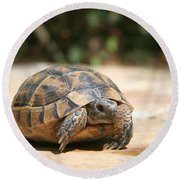 Young Tortoise Emerging From Its Shell Round Beach Towel