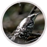 Young Woodpecker Round Beach Towel