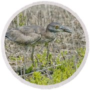 Young Yellow-crowned Night Heron Round Beach Towel