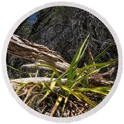 Pedernales Park Texas Yucca By The Dead Tree Round Beach Towel