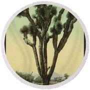 Yucca Cactus At Hesperia California Round Beach Towel