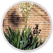 Yucca In The Morning Round Beach Towel
