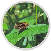 Zabulon Skipper Butterfly - Poanes Zabulon - Female Round Beach Towel