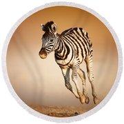 Zebra Calf Running Round Beach Towel