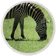 Zebra Eating Grass Round Beach Towel