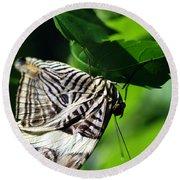 Zebra Long-wing Butterfly  Round Beach Towel
