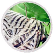 Zebra Long-wing Close-up Round Beach Towel