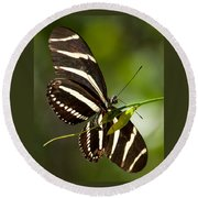 Zebra Longwing 3 Round Beach Towel