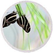 Zebra Longwing Butterflies Mating Round Beach Towel