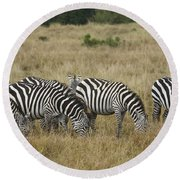 Zebra On Masai Mara Plains Round Beach Towel