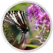 Zebra Swallowtail Butterfly At Butterfly Bush Round Beach Towel