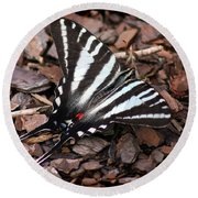 Zebra Swallowtail Butterfly Round Beach Towel