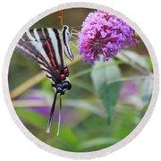 Zebra Swallowtail Butterfly On Butterfly Bush  Round Beach Towel