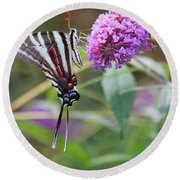 Zebra Swallowtail Butterfly On Butterfly Bush  Round Beach Towel