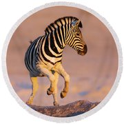 Zebras Jump From Waterhole Round Beach Towel