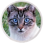 Zing The Cat Looking At Us Round Beach Towel