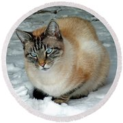 Zing The Cat On The Porch In The Snow 2 Round Beach Towel
