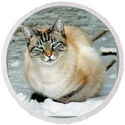 Zing The Cat On The Porch In The Snow Round Beach Towel
