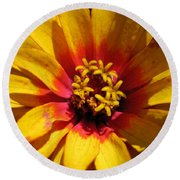Zinnia Named Swizzle Scarlet And Yellow Round Beach Towel