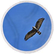 Zone-tailed Hawk Round Beach Towel