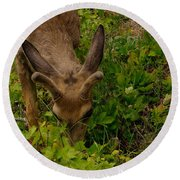 A Young Buck Grazing Round Beach Towel