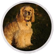 American Cocker Spaniel Round Beach Towel