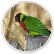 Lorikeet Parrot Sitting On A Fence Post  Round Beach Towel