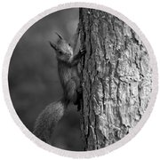 Red Squirrel In Bw Round Beach Towel