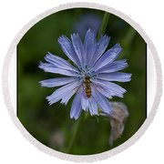 Spring Flower And Hoverfly Round Beach Towel