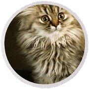 Startled Persian Kitten Round Beach Towel