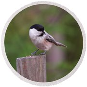 Willow Tit With Seeds Round Beach Towel