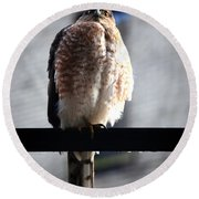 05 Falcon Round Beach Towel