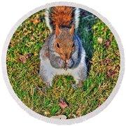 06 Grey Squirrel Sciurus Carolinensis Series Round Beach Towel