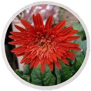 A Beautiful Red Flower Growing At Home Round Beach Towel