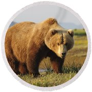 A Brown Grizzly Bear Ursus Arctos Round Beach Towel