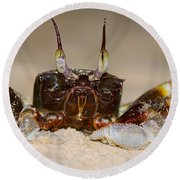 A Crab On The Shore  Round Beach Towel