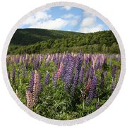 A Field Of Lupins Round Beach Towel