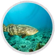 A Goliath Grouper Effortlessly Floats Round Beach Towel