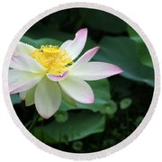 A Pink Tipped White Lotus Round Beach Towel