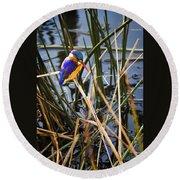 African Pigmy Kingfisher Round Beach Towel