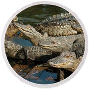 Alligator Pool Party Round Beach Towel