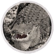 American Alligator Round Beach Towel